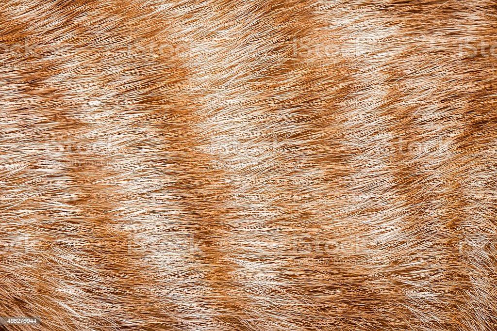 Close-up of ginger cat fur stock photo