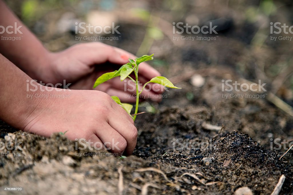 Hands Planting Vegetable Garden stock photo