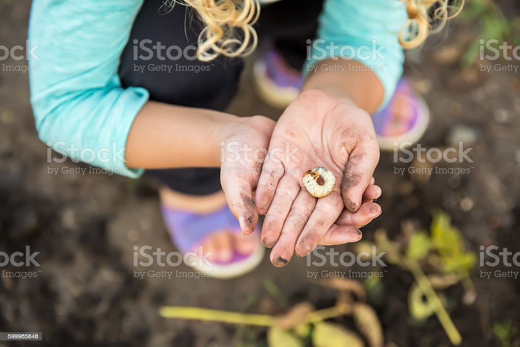 Close-Up of Girl's Hands Holding Grub Worm stock photo