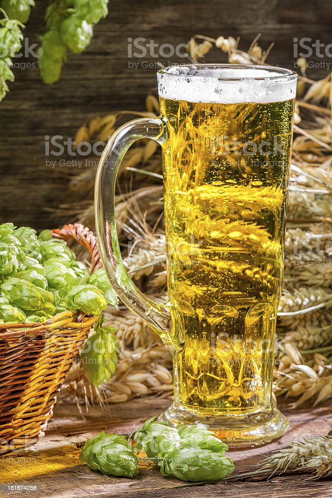 Closeup of golden ears in fresh beer royalty-free stock photo