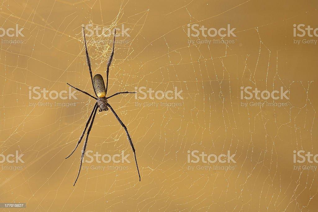 Zbliżenie z golden orb web spider zbiór zdjęć royalty-free