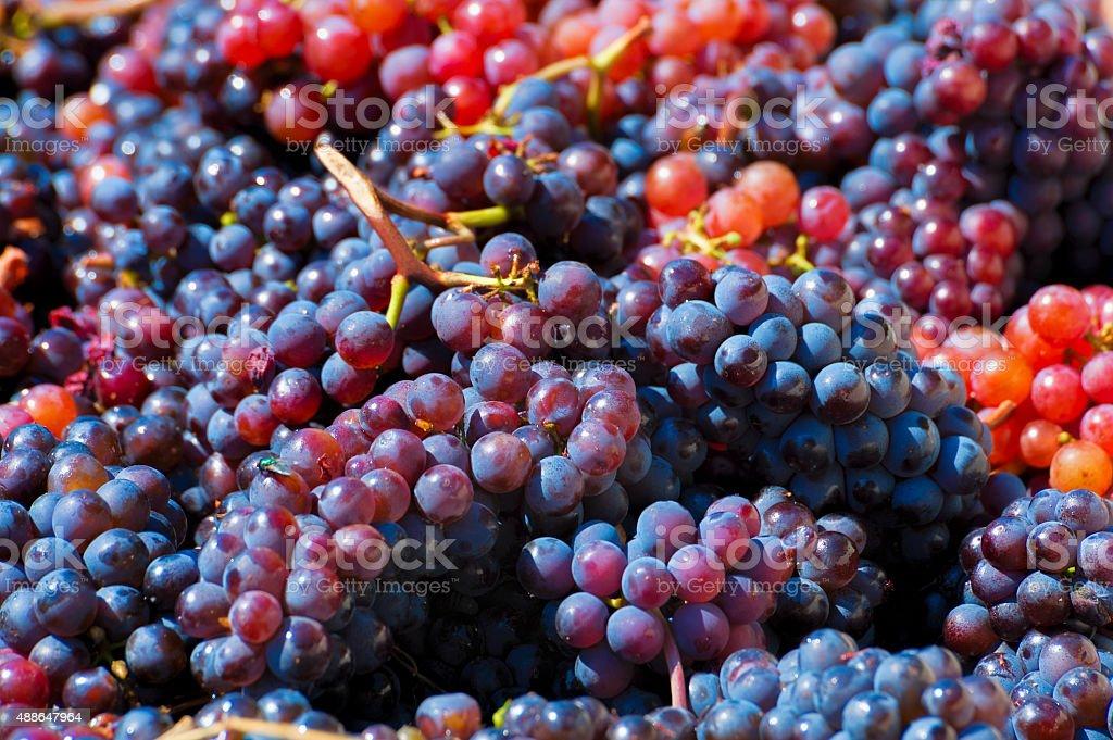 Closeup of grapes stock photo