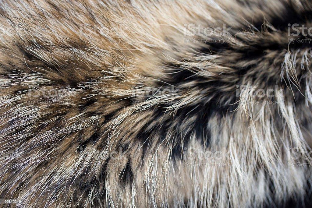 Close-up of gray black brown luxury animal fur stock photo