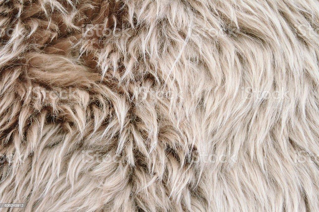 Close-up of gray sheep woolen fur stock photo