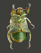 close-up of green beetle
