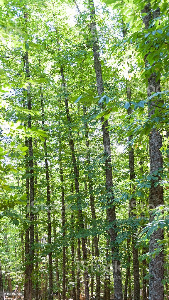 closeup of green chestnut grove vertical composition stock photo