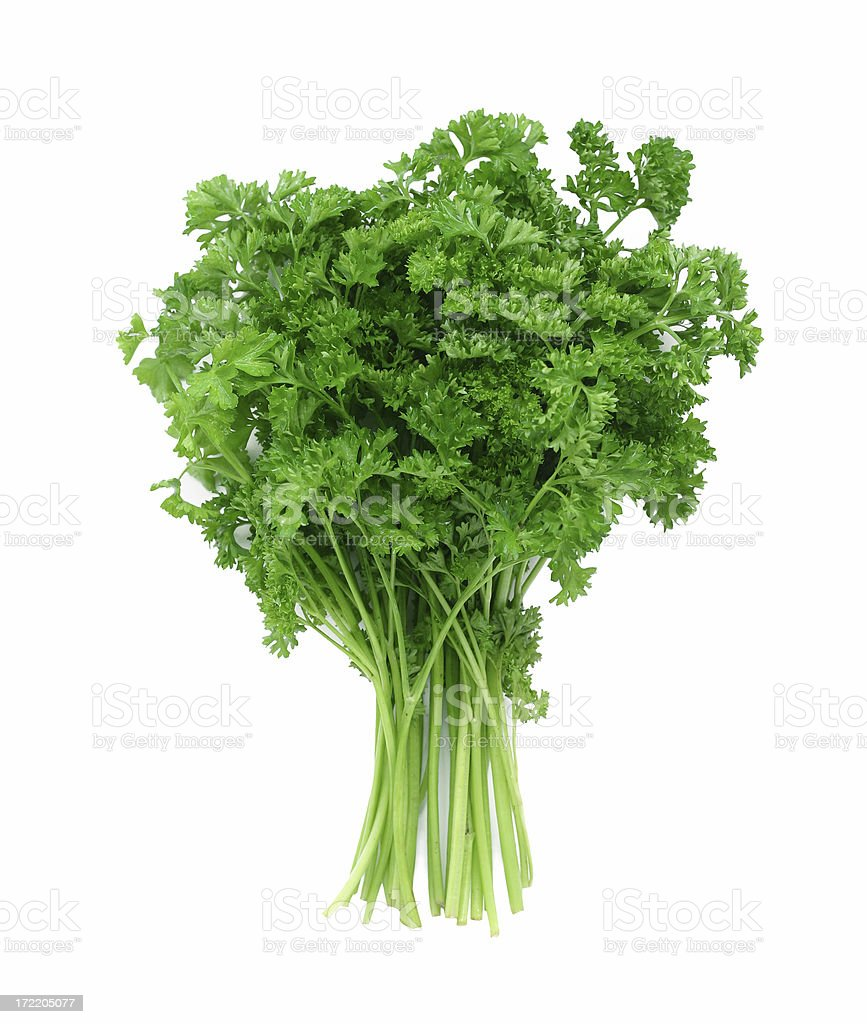 A close-up of green curly parsley stock photo