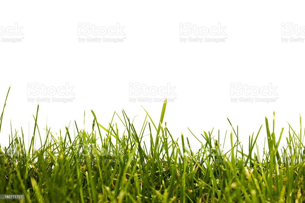 A close-up of green grass against a clear sky royalty-free stock photo