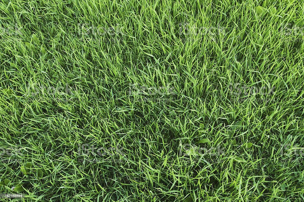 Close-up of green grass background royalty-free stock photo