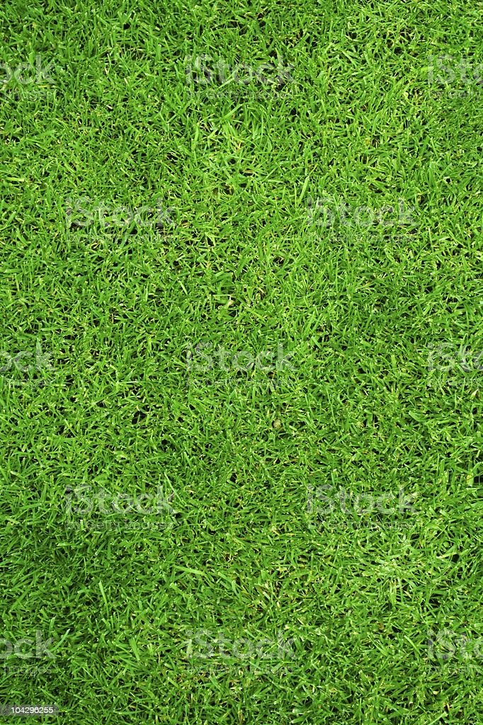 Close-up of green grass in a seamless pattern background royalty-free stock photo