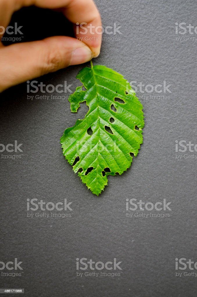 close-up of green leaf with holes stock photo