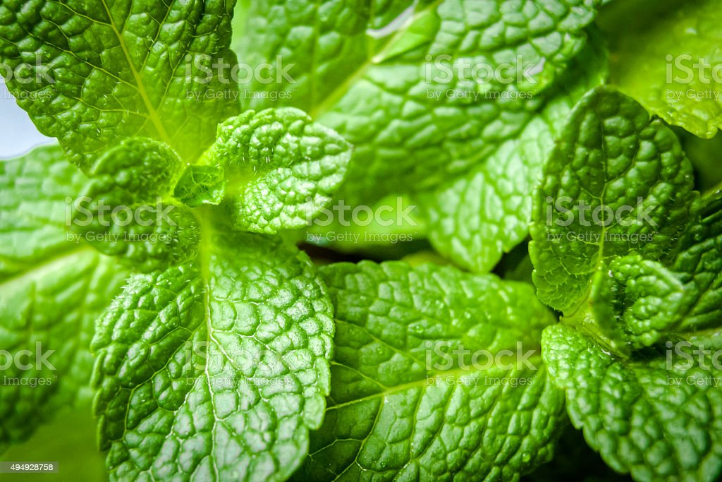 Closeup of green mint leaves stock photo
