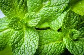 Closeup of green mint leaves