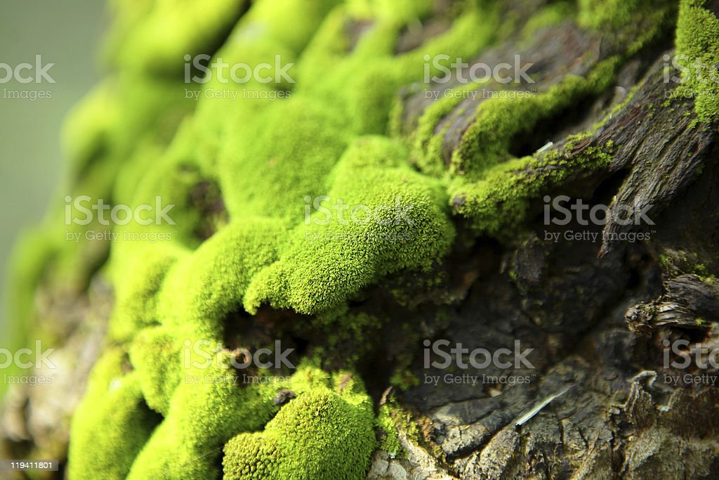 Close-up of green moss growing on bark stock photo