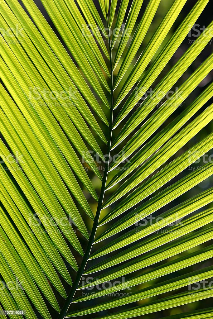Closeup of green palm tree branch stock photo