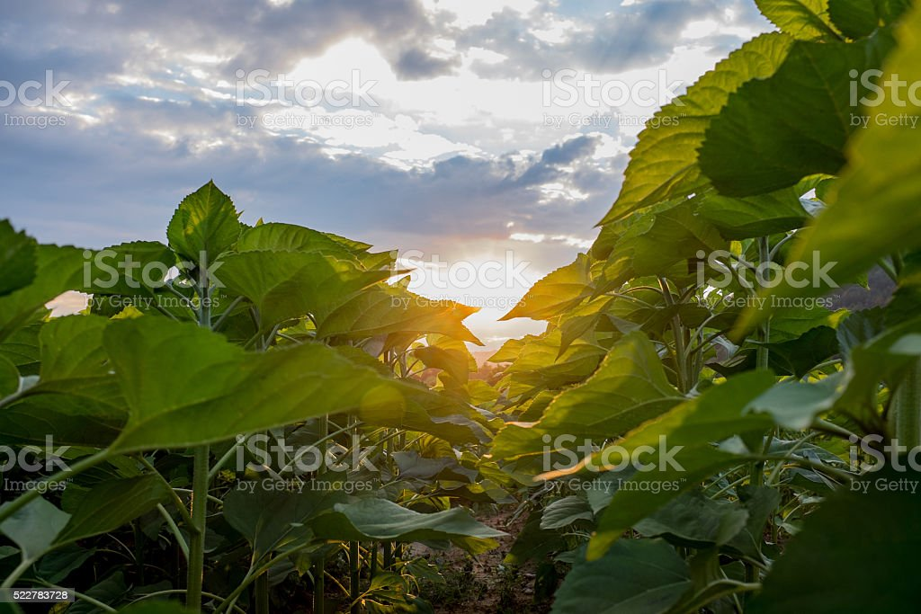 Closeup of green plants and sunlight stock photo