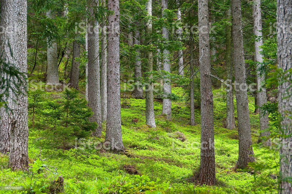 Close-up of green trees and grass in a forest royalty-free stock photo