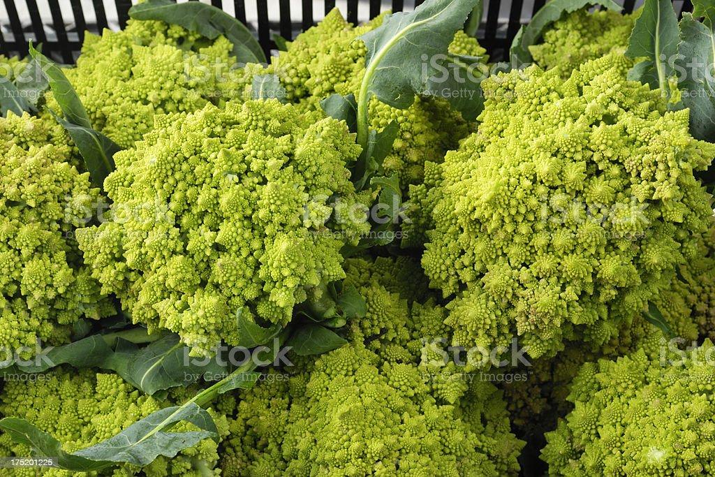 Close-up of Harvested Organic Romanesco Broccoli royalty-free stock photo