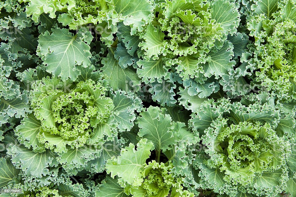 A close-up of heads of green kale royalty-free stock photo