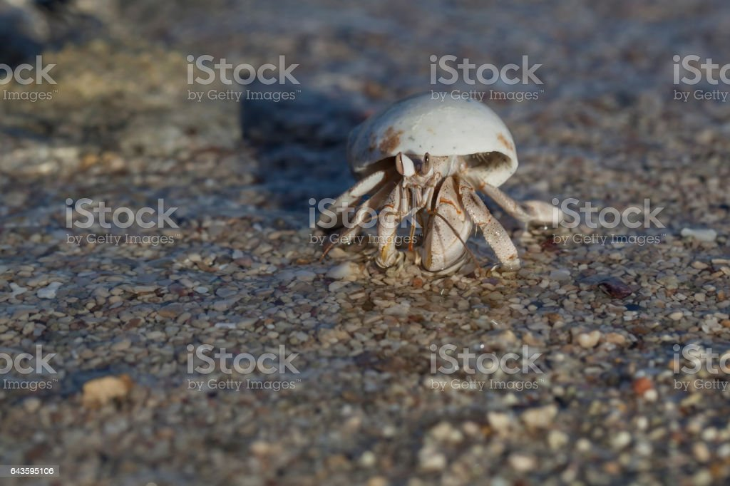 Close-up of hermit crab stock photo