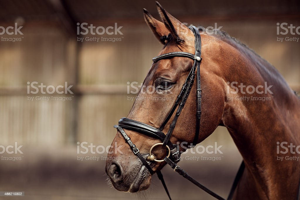 close-up of horse stock photo