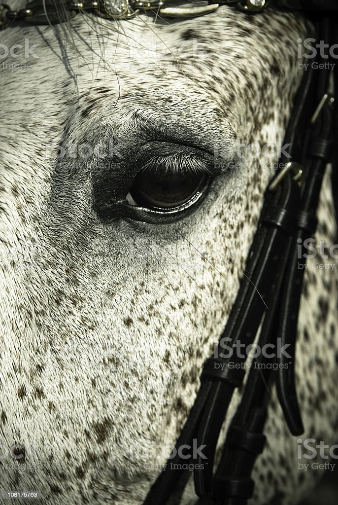 Close-up of Horses Eye royalty-free stock photo