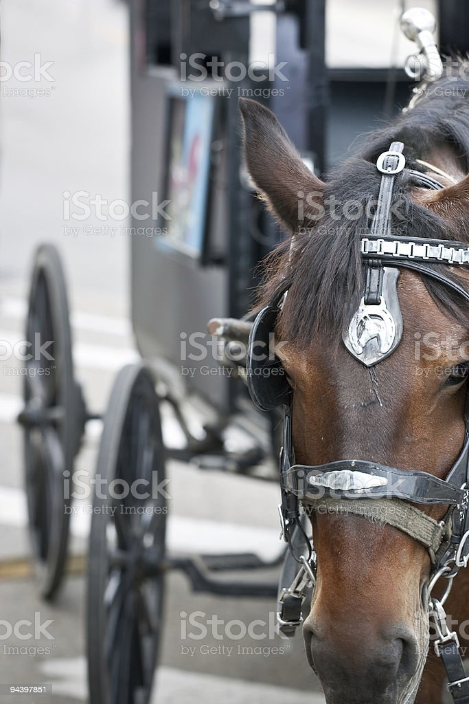 Closeup of horses head with carriage behind royalty-free stock photo