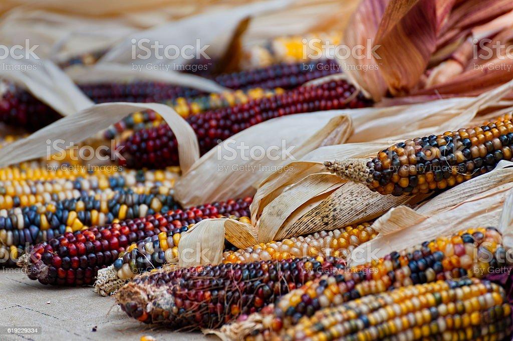 Closeup of Indian Corn stock photo