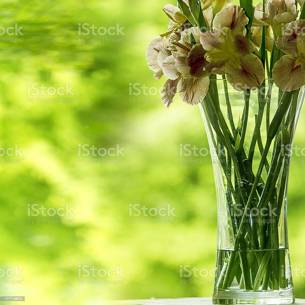 Close-up of iris flower royalty-free stock photo