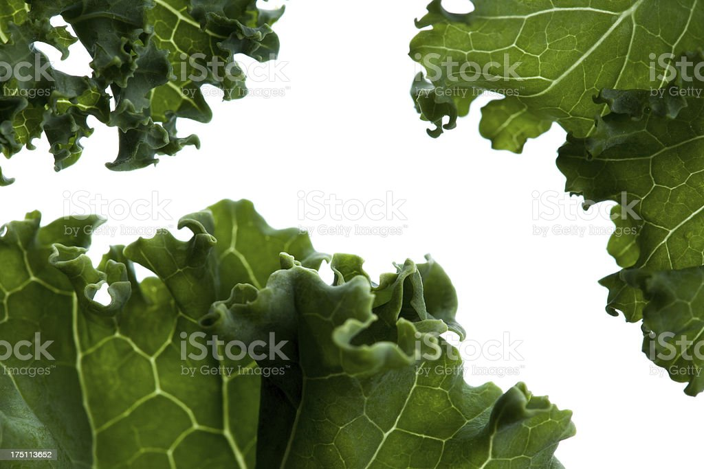 closeup of kale leafs on white background stock photo