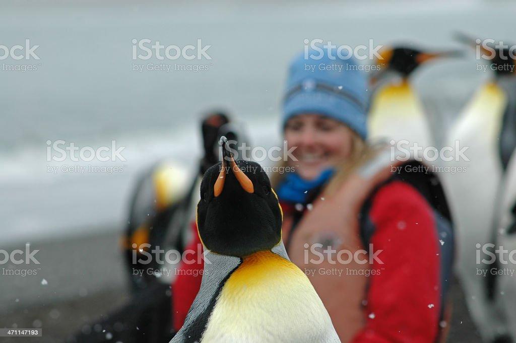 Close-up of King penguin on beach with beak raised stock photo