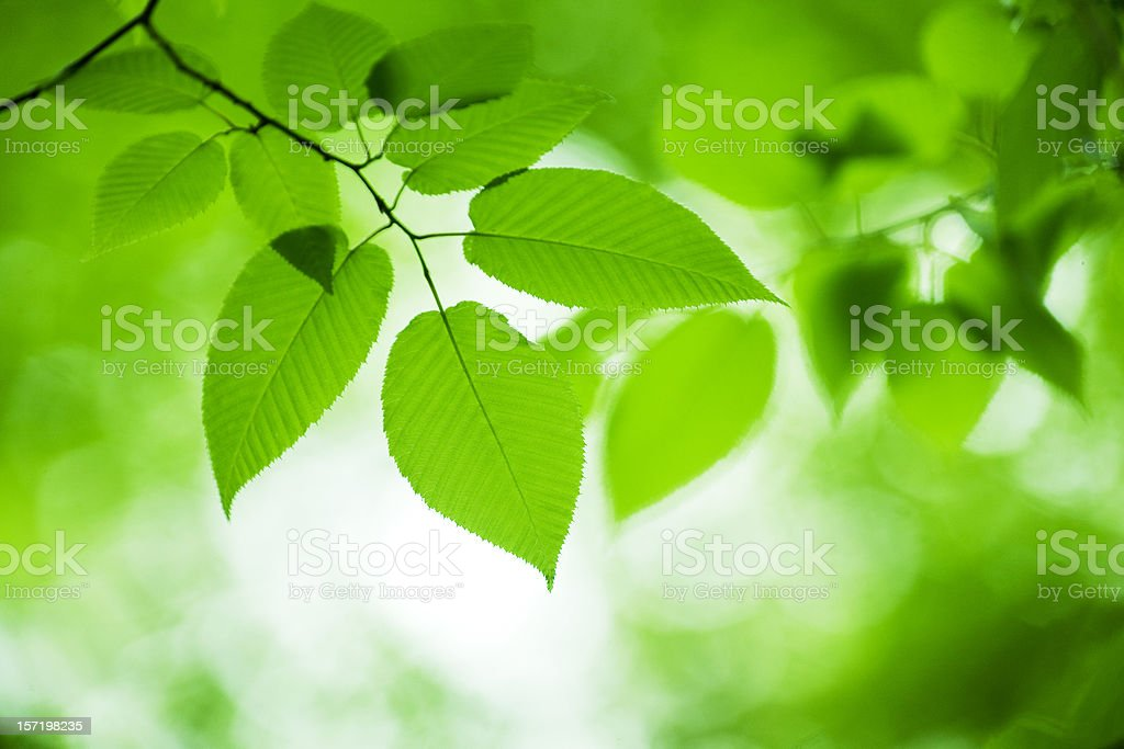 Close-up of leaves royalty-free stock photo