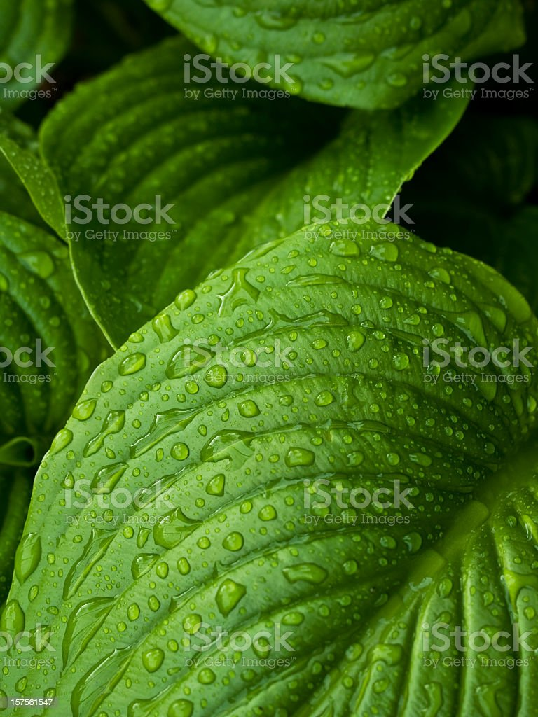 Close-up of leaves with dew drops stock photo