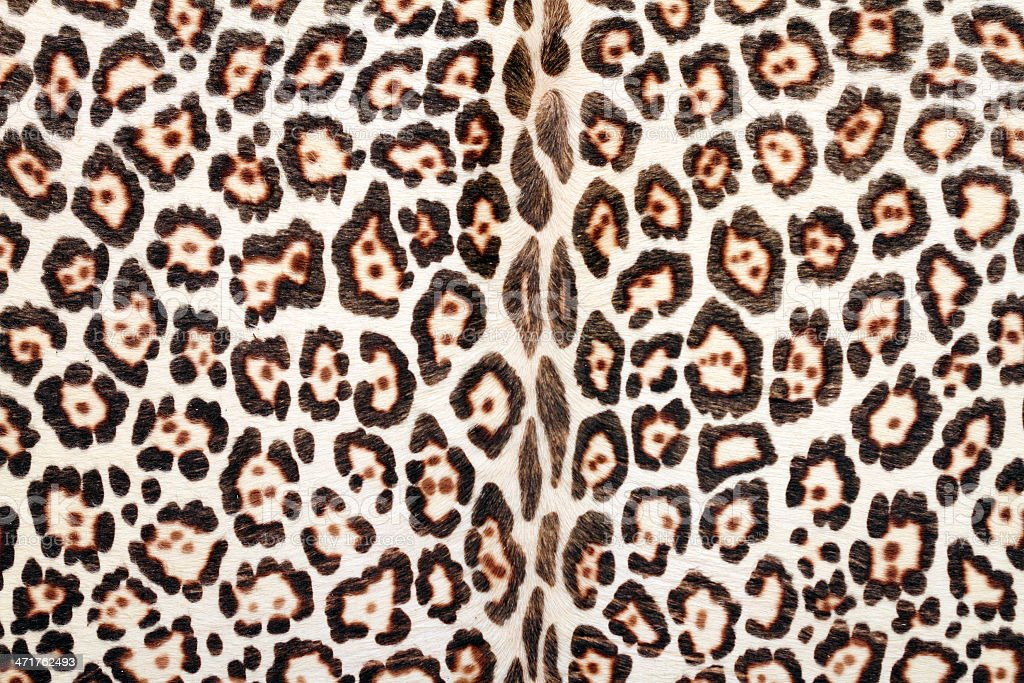 closeup of leopard fur royalty-free stock photo