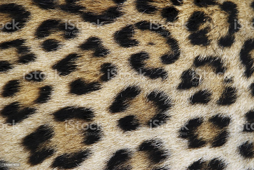 Close-up of leopard print brown and black stock photo
