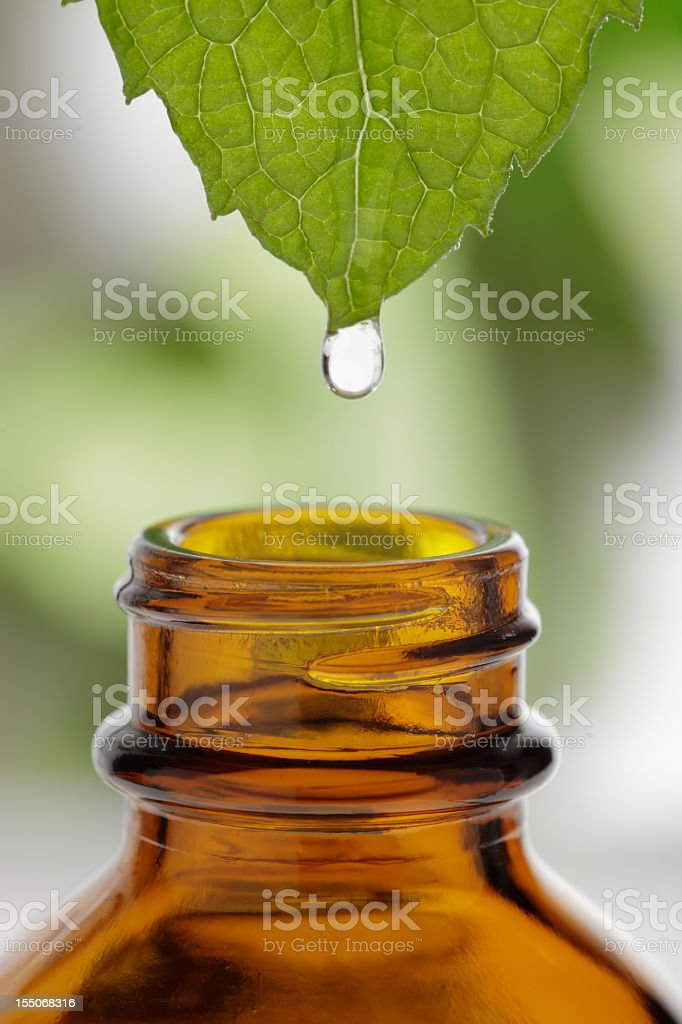 Close-up of liquid dripping off a leaf into a glass bottle royalty-free stock photo