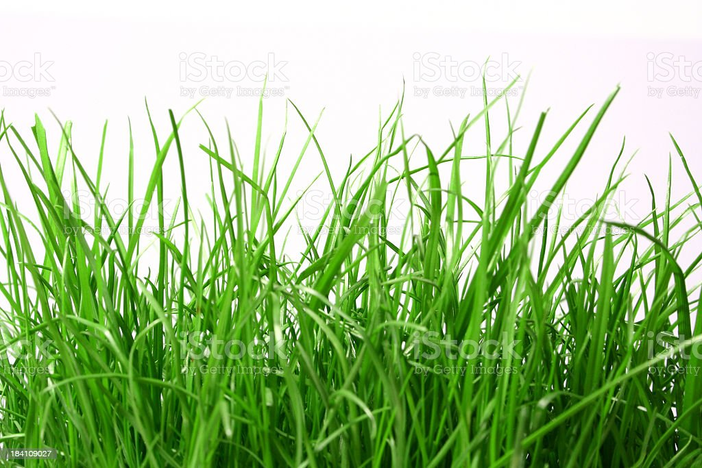 Close-up of long green grass in a white background royalty-free stock photo