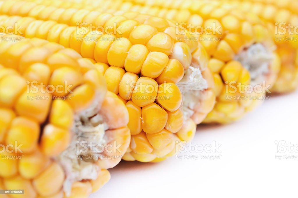 closeup of maize stock photo