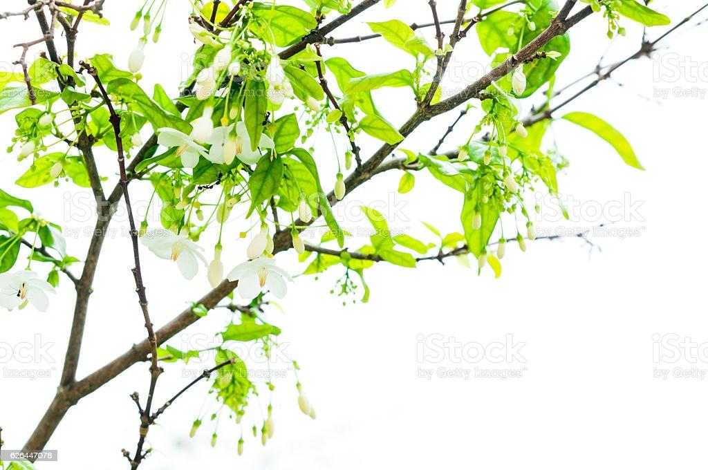closeup of moke flower tree in garden stock photo