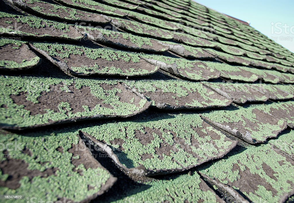 Close-up of moldy, green roof shingles royalty-free stock photo