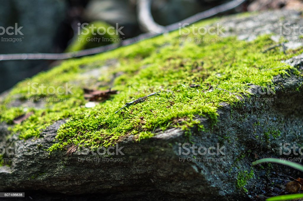 Close-up of moss on a rock stock photo