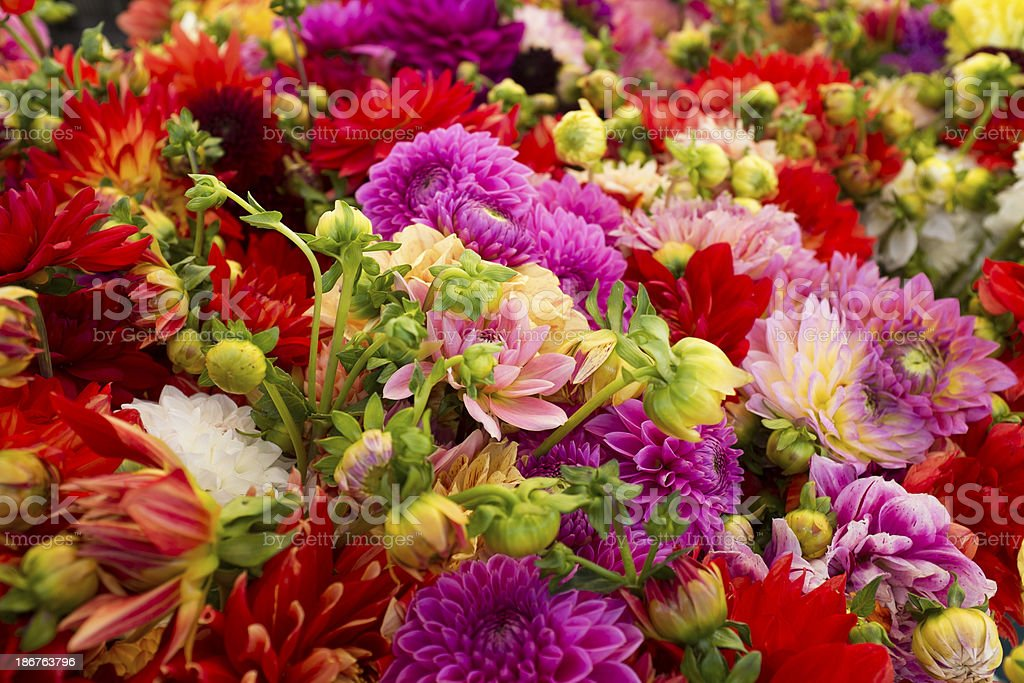 Close-up of Multicolored Flowers Bunched Together royalty-free stock photo