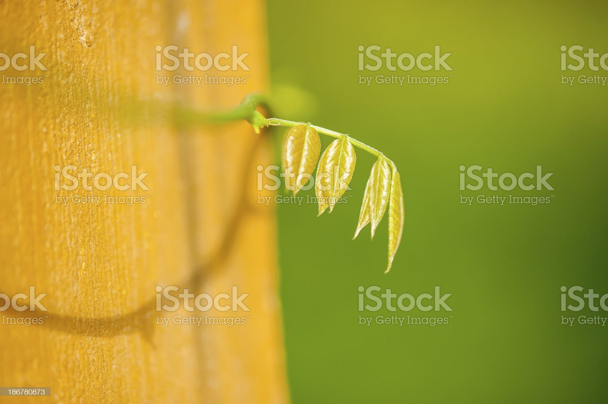 Close-up of New Leaves royalty-free stock photo