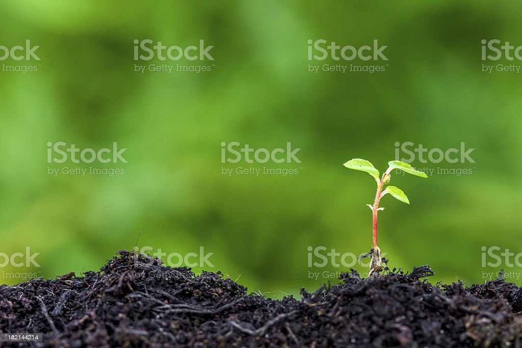 Closeup of new seedling sprouting from the ground stock photo