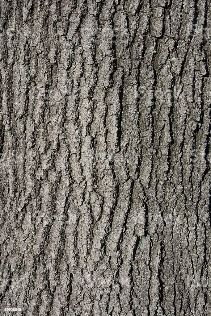 Closeup of Oak Tree Trunk Bark Background royalty-free stock photo
