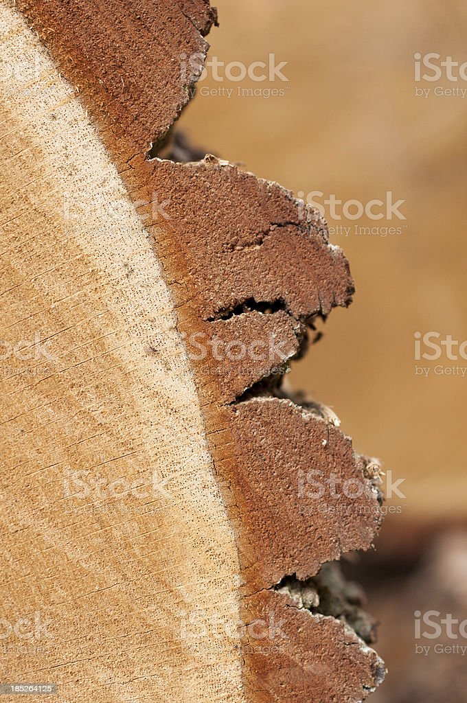 Close-up of oak wood with bark royalty-free stock photo