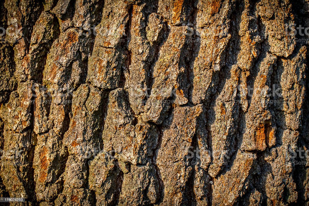 closeup of old bark background royalty-free stock photo
