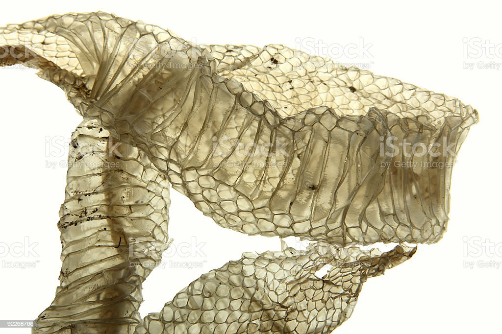 Close-up of old skin shed from a snake stock photo