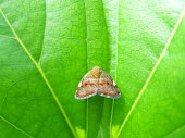 close-up of one little brown butterfly on bright green leaf
