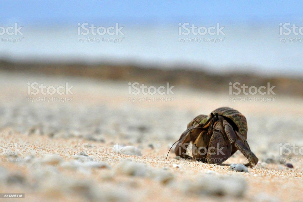 Close-up of one small Coconut Crab on a sandy beach stock photo